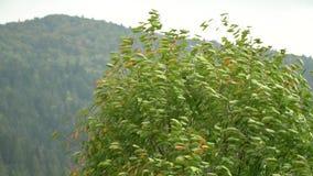 Baum im Wind Der Wind zerreißt die Blätter weg vom Baum Herbst-fallende Blätter stock footage