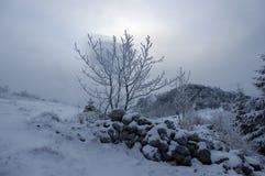 Baum im Winter Stockfotos