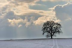 Baum im Winter Lizenzfreie Stockbilder