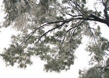 Baum im Winter Stockfotografie