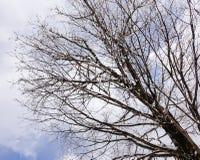 Baum im Winter Stockfoto