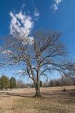 Baum im Winter Lizenzfreie Stockfotos
