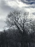 Baum im Winter Lizenzfreies Stockbild