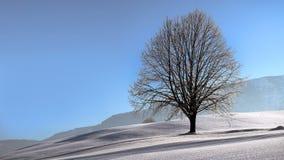 Baum im Winter Stockbild