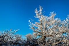 Baum im Winter, Deogyusan-Berge in Südkorea Lizenzfreie Stockfotografie