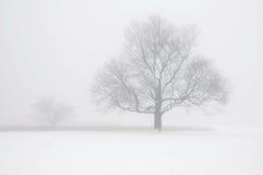 Baum im Winter-Nebel Lizenzfreies Stockbild