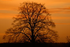 Baum im Winter am Sonnenaufgang Lizenzfreie Stockfotos
