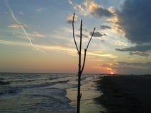Baum innerhalb des Himmels Lizenzfreie Stockfotos
