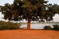 Baum innerhalb des udawalawe Nationalparks, Sri Lanka stockfotografie