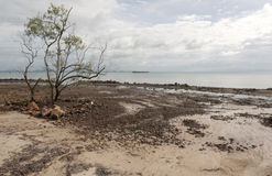 Baum ist auf Strand Lizenzfreies Stockfoto