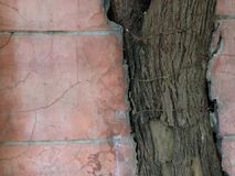 Baum ist stärker Stockfotografie