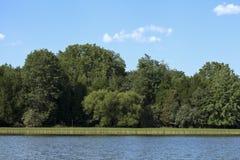 Baum-Küstenlinie Stockbilder