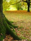 Baum-Kabel Stockfotos