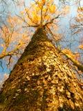 Baum-Kabel Lizenzfreies Stockbild