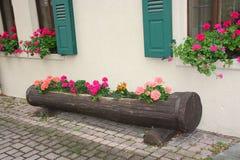Baum-Kabel-Blumen-Kasten Lizenzfreies Stockbild