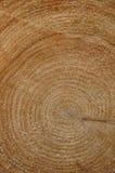 Baum-Kabel-rote hölzerne Ringe stockbild