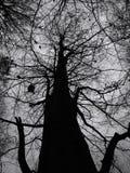 Baum-Kabinendach lizenzfreie stockfotos