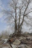 Baum keimte Wurzeln in einem großen rostigen Rohr Stockfoto