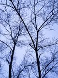 Baum-Kunst Lizenzfreies Stockbild