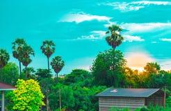 Baum lässt Himmel und Sonne auf undeutlichem Vordergrund mit Baumhintergrund im Garten der forestUsing Tapete oder des Hintergrun Lizenzfreie Stockfotografie
