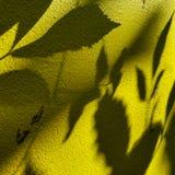 Baum lässt Schatten auf Wandhintergrund stockfoto