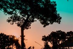 Baum lässt Schatten fallen Stockbilder