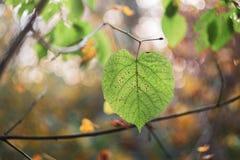 Baum lässt Waldlaub im Herbst stockfoto