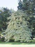 Baum am Landhaus Melzi lizenzfreies stockfoto