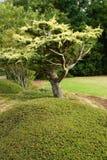 Baum in landschaftlich verschönertem Garten lizenzfreie stockfotografie