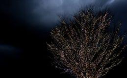 Baum-Lichter nachts Lizenzfreie Stockfotos