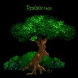 Baum lokalisiert auf einem schwarzen Hintergrund und der Phrase stockbilder