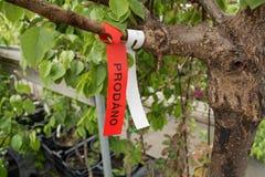 Baum markiert für Verkauf Stockfotos