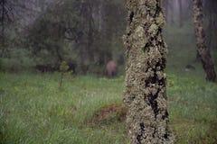 Baum mit ökologischem Index der Flechte stockfotografie