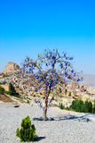 Baum mit Amuletten lizenzfreies stockfoto