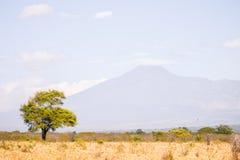 Baum mit Berg im Hintergrund lizenzfreies stockbild