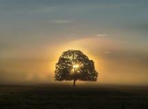 Baum mit Blättern bei Sonnenaufgang, goldene Stunde, in der Mitte mit Nebel Stockbilder