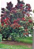 Baum mit Blüten Stockfoto