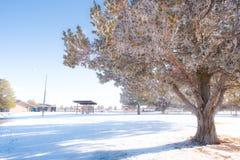 Baum mit blauem Himmel Stockfotos