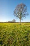 Baum mit bloßen Niederlassungen in einer ländlichen Landschaft Stockbild