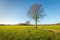 Baum mit bloßen Niederlassungen in einer ländlichen Landschaft Lizenzfreie Stockfotos
