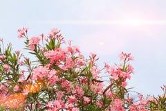 Baum mit Blumen gegen den Himmel Lizenzfreie Stockbilder