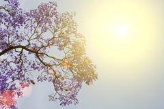 Baum mit Blumen gegen den Himmel Lizenzfreie Stockfotos