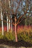 Baum mit dekorativer Barke im Wintergarten Stockbild