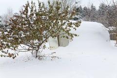 Baum mit den Blättern punktiert mit Schnee stockbilder