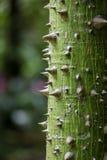 Baum mit den Dornen Lizenzfreie Stockbilder