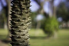 Baum mit den Dornen Stockfoto
