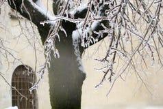 Baum mit den Niederlassungen umfasst vom Eis für gelicidio Lizenzfreie Stockfotos