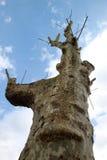 Baum mit den Zweigen abgeschnitten Stockbild