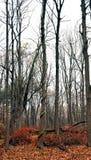 Baum mit der Rebe eingewickelt um Kabel Lizenzfreie Stockfotografie