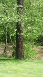 Baum mit einem Gesicht stockfoto